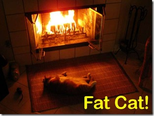 FAT_CAT_2